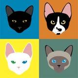 Zu viele Katzen Lizenzfreie Stockfotos
