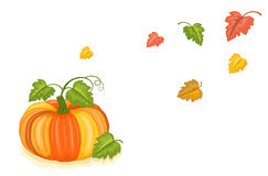 Zucca appena raccolta di autunno illustrazione vettoriale