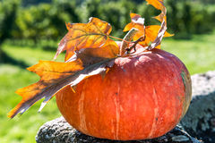 Zucca arancio con le foglie di autunno sulla cima Immagine Stock