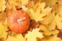 Zucca arancio contro le foglie gialle Fotografia Stock Libera da Diritti