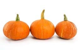 Zucca arancio fresca Immagini Stock
