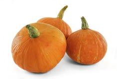 Zucca arancio fresca Immagine Stock
