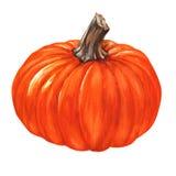 Zucca arancio fresca dell'acquerello isolata Immagine Stock