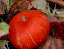 Zucca arancio luminosa nel canestro fotografia stock libera da diritti