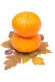 Zucca arancio rotonda due sulle foglie di autunno isolate Immagine Stock