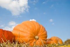 Zucca arancione Immagine Stock