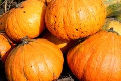 Zucca arancione Fotografie Stock