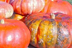 Zucca arancione Immagine Stock Libera da Diritti