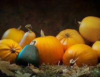 Zucca arancione che si trova sulla priorità bassa scura Immagine Stock