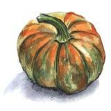 Zucca arancione Illustrazione dell'acquerello isolata su fondo bianco immagini stock
