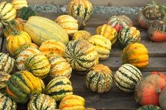 Zucca, autunno, Germania Immagini Stock