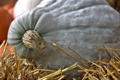 Zucca bianca Fotografia Stock