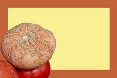 Zucca brutta impilata su altre zucche decorative contro fondo in bianco giallo incorniciato con l'arancia fotografia stock libera da diritti