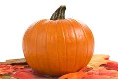 Zucca con i fogli di autunno Fotografie Stock