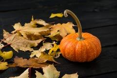 Zucca con le foglie immagini stock libere da diritti