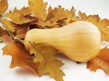 Zucca con le foglie di autunno Fotografie Stock Libere da Diritti