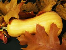 Zucca con le foglie di autunno Immagini Stock