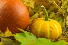 Zucca con le foglie nei colori di autunno Fotografia Stock