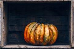 Zucca Curvy dell'azienda agricola di giallo arancio di forma in scatole di legno sullo scaffale del mercato Immagine Stock