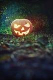 Zucca d'ardore nella lanterna di Jack O della foresta per Halloween Immagini Stock