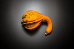 Zucca decorativa Immagini Stock
