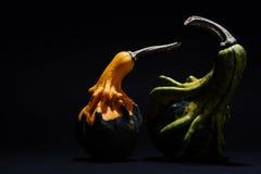 Zucca decorativa isolata su fondo nero Immagini Stock
