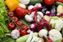 Zucca del cetriolo dei pomodori degli ortaggi freschi Immagini Stock