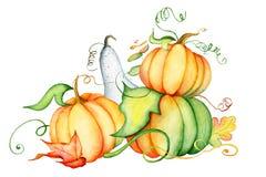 Zucca dell'acquerello e foglie di autunno Composizione nel raccolto Giorno felice di ringraziamento Illustrazione disegnata a man Fotografia Stock