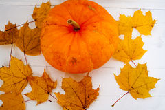 Zucca della pittura di giallo di autunno delle foglie di acero Immagine Stock