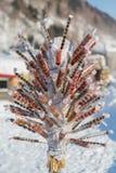 Zucca dello zucchero del ghiaccio Fotografie Stock Libere da Diritti