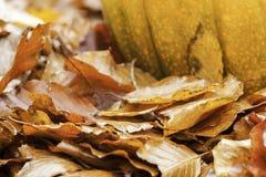 Zucca di autunno Fotografia Stock Libera da Diritti