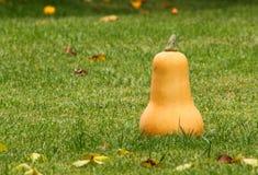Zucca di autunno Immagine Stock Libera da Diritti
