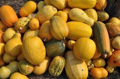 Zucca di autunno selezionata harvest_2 Fotografia Stock