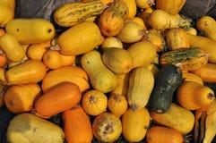Zucca di autunno selezionata harvest_3 Immagine Stock