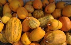 Zucca di autunno selezionata harvest_6 Immagini Stock