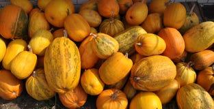 Zucca di autunno selezionata harvest_5 Immagini Stock Libere da Diritti