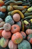 Zucca di autunno selezionata harvest_8 Immagini Stock Libere da Diritti