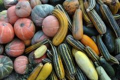 Zucca di autunno selezionata harvest_9 Fotografia Stock Libera da Diritti
