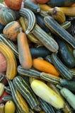 Zucca di autunno selezionata harvest_10 Fotografia Stock Libera da Diritti