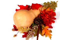 Zucca di Butternut nella regolazione di autunno Fotografie Stock Libere da Diritti