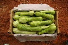 Scatola di zucche di estate Fotografia Stock Libera da Diritti