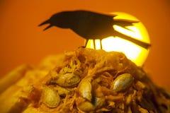 Zucca di Halloween con il corvo che si siede su  Fotografie Stock