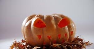 Zucca di Halloween con la foglia di acero contro fondo bianco 4k video d archivio