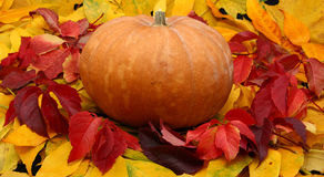 Zucca di Halloween in fogli variopinti Fotografia Stock Libera da Diritti