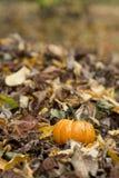 Zucca di Halloween in un ambiente della natura di caduta Fotografie Stock