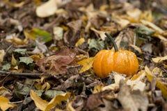 Zucca di Halloween in un ambiente della natura di caduta Fotografia Stock