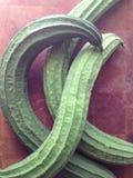 Zucca di seta asiatica Fotografia Stock Libera da Diritti