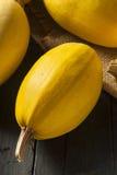 Zucca di spaghetti gialla organica cruda Fotografia Stock Libera da Diritti