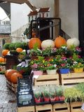 Zucca e fiori da vendere fotografia stock