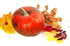 Zucca e fogli di autunno maturi Fotografie Stock